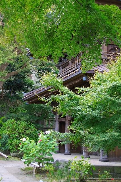 鎌倉の秋の花 英勝寺の芒_f0374092_18544345.jpg