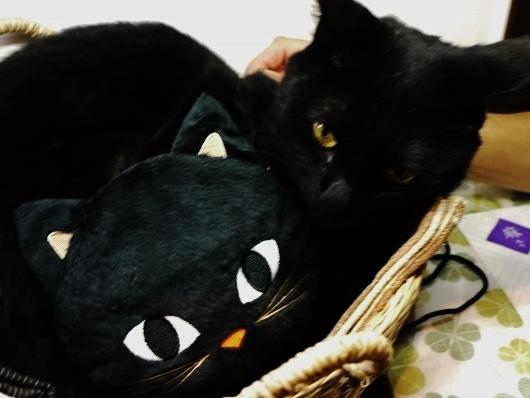 友達ニャン~♡_e0167795_16074340.jpg