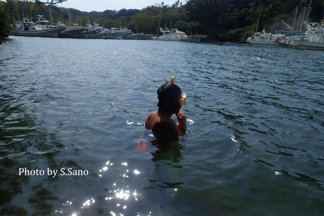 ウミアメンボ ~幻の三浦半島産を追って~ その2_b0348205_20475115.jpg