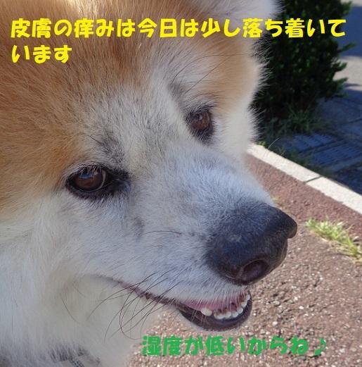 f0121712_15584563.jpg