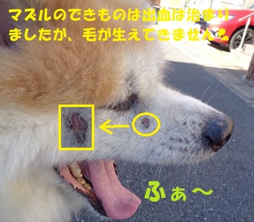 f0121712_15590047.jpg
