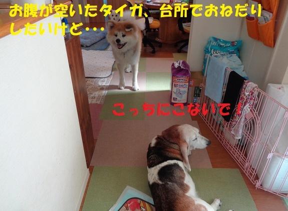 f0121712_16123802.jpg