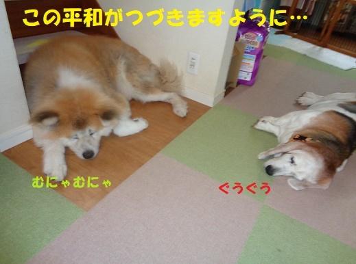 f0121712_16285847.jpg