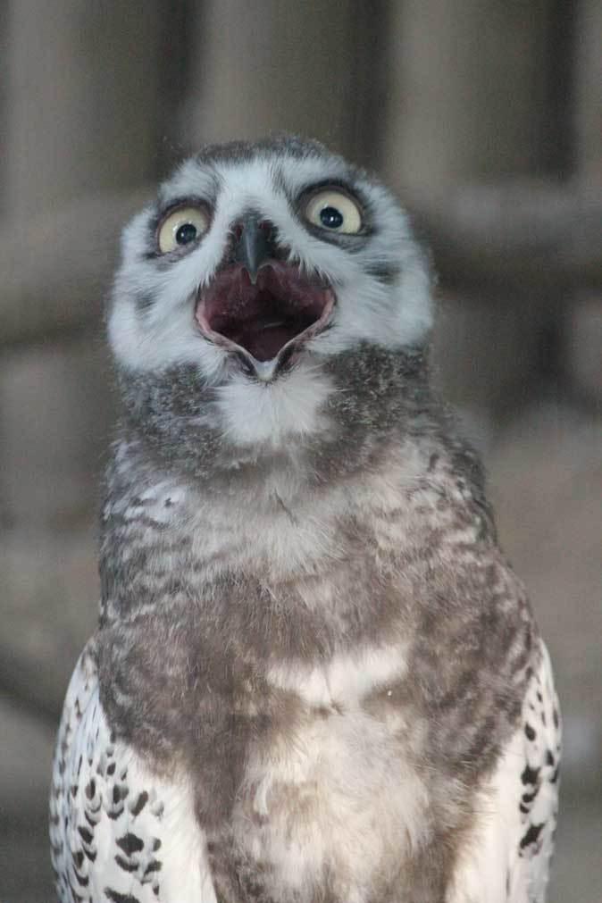 上野・真夏の夜の動物園2019①~夕暮れの猛禽たち_b0355317_21464504.jpg