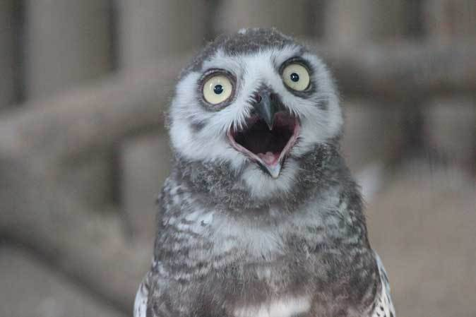 上野・真夏の夜の動物園2019①~夕暮れの猛禽たち_b0355317_21534564.jpg
