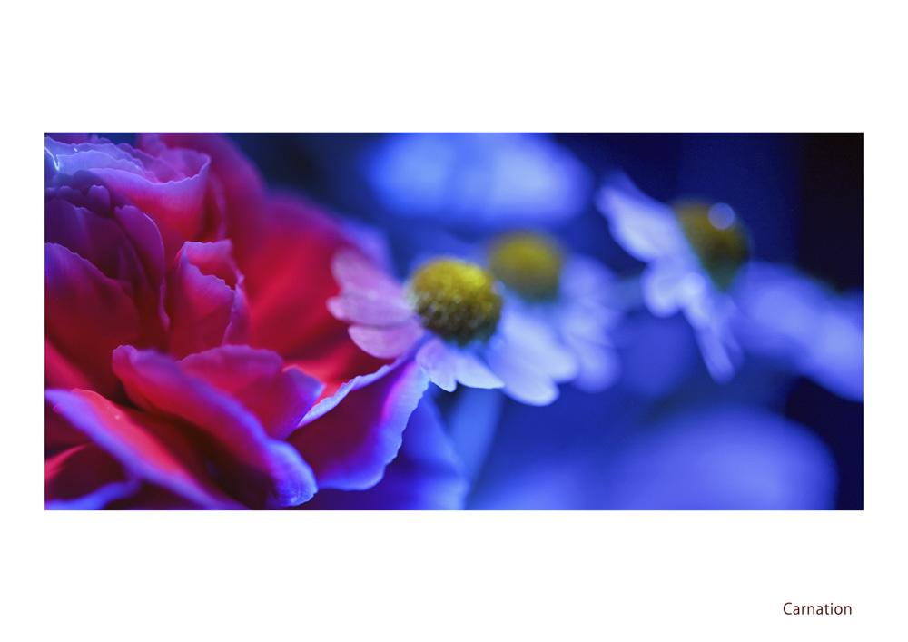 わたしの花園_d0265224_21575517.jpg