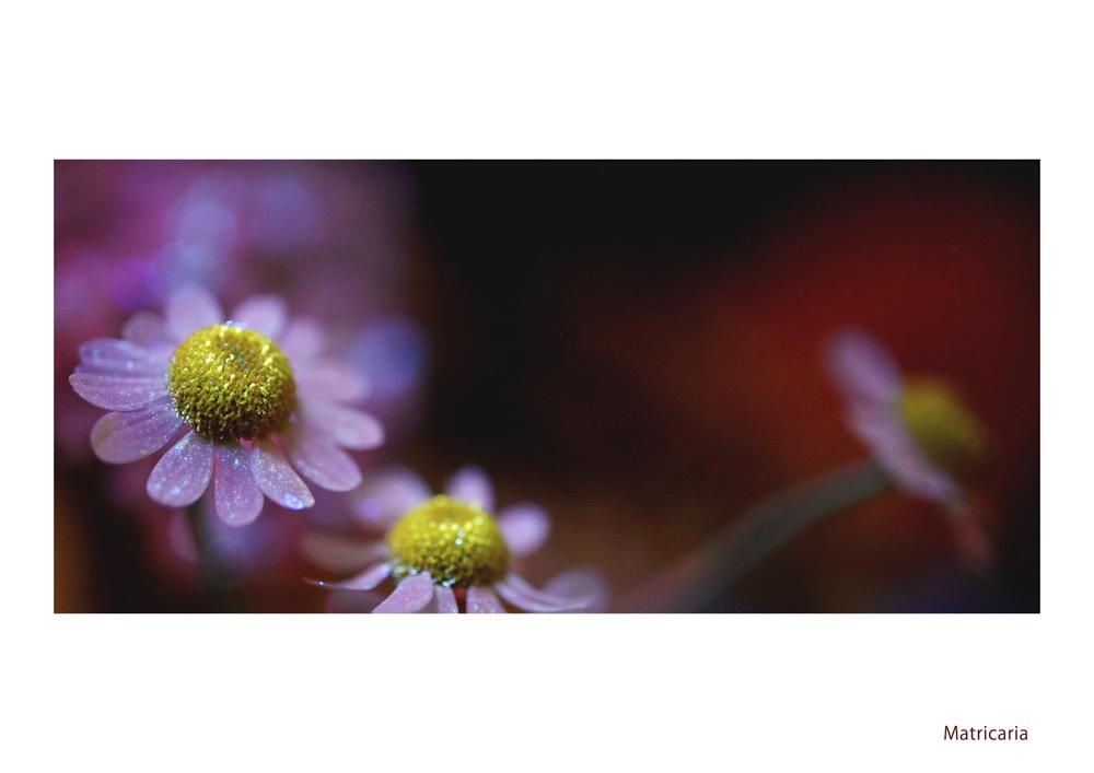 わたしの花園_d0265224_21575569.jpg
