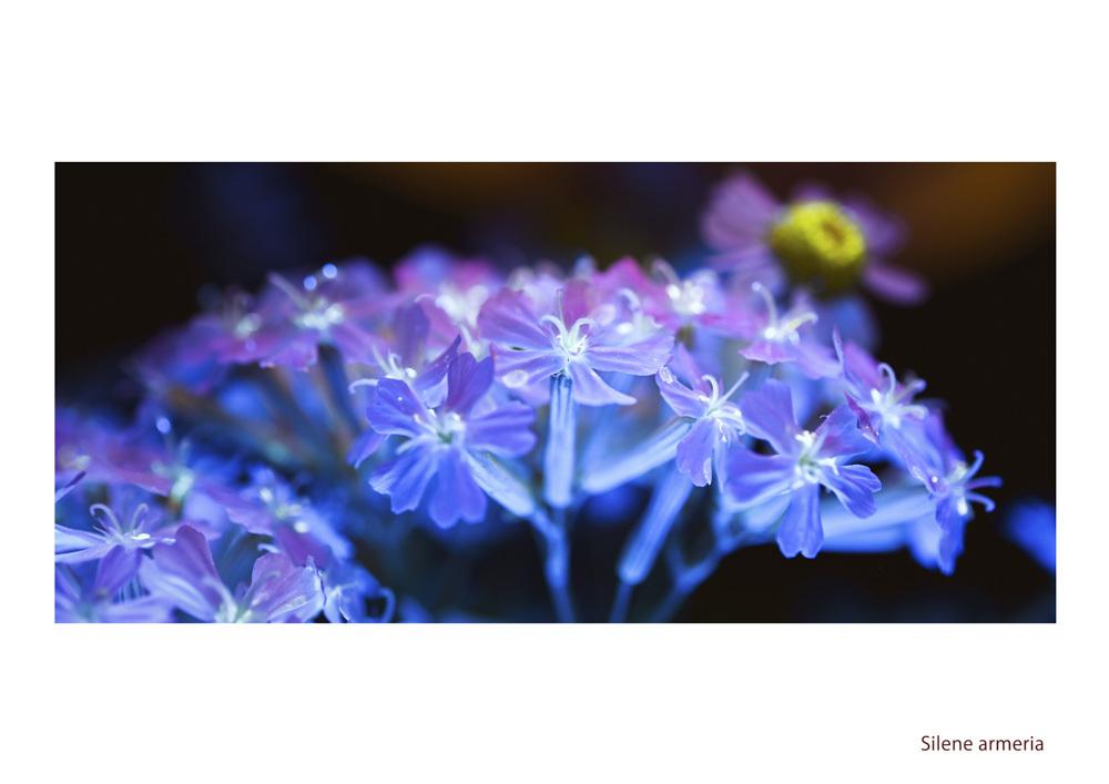 わたしの花園_d0265224_21575578.jpg