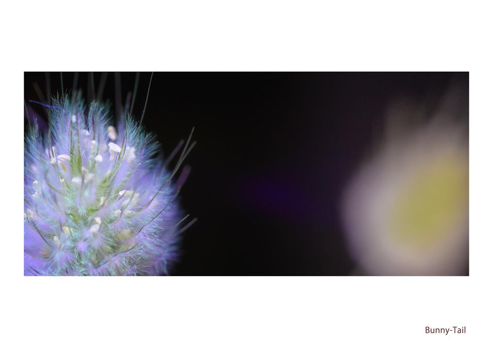 わたしの花園_d0265224_21575651.jpg