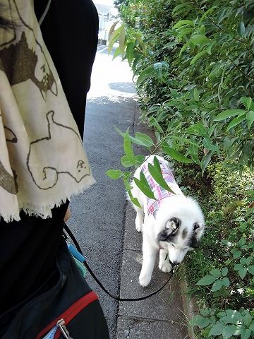 散歩屋日誌【18】_c0062832_15331230.jpg