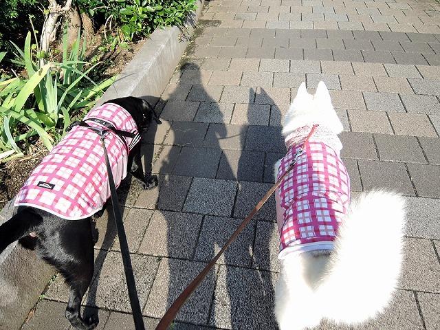 散歩屋日誌【18】_c0062832_15331316.jpg