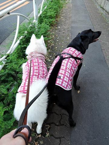 散歩屋日誌【18】_c0062832_15331332.jpg