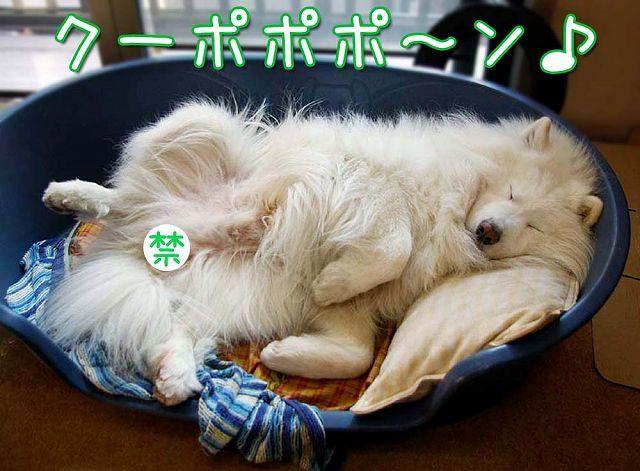 散歩屋日誌【18】_c0062832_16250203.jpg