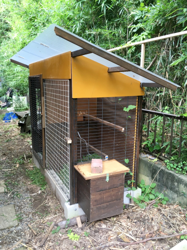 【薩摩鶏】2019年秋・小屋も新築。_c0331246_14245417.jpg