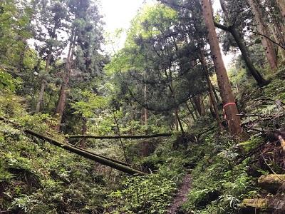 札立峠から水潜寺へ(下見の下見)_f0019247_1623478.jpg