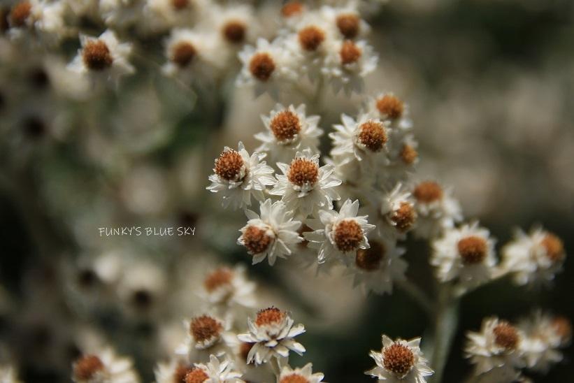 山のお花畑***_c0145250_10290726.jpg