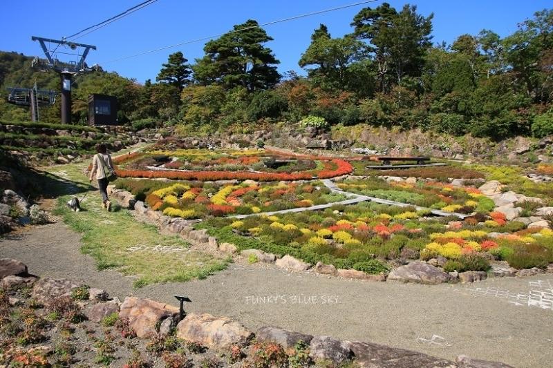 山のお花畑***_c0145250_10292906.jpg