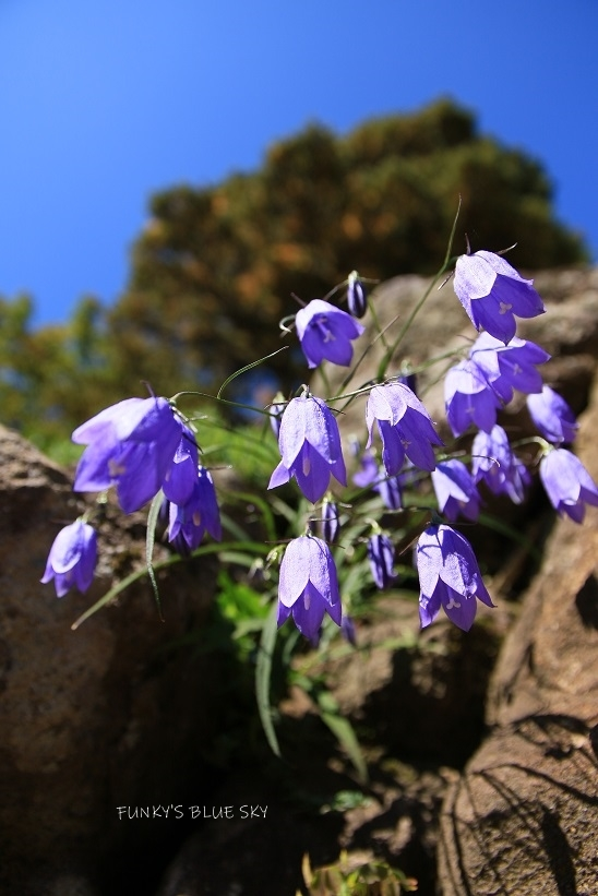 山のお花畑***_c0145250_10294896.jpg