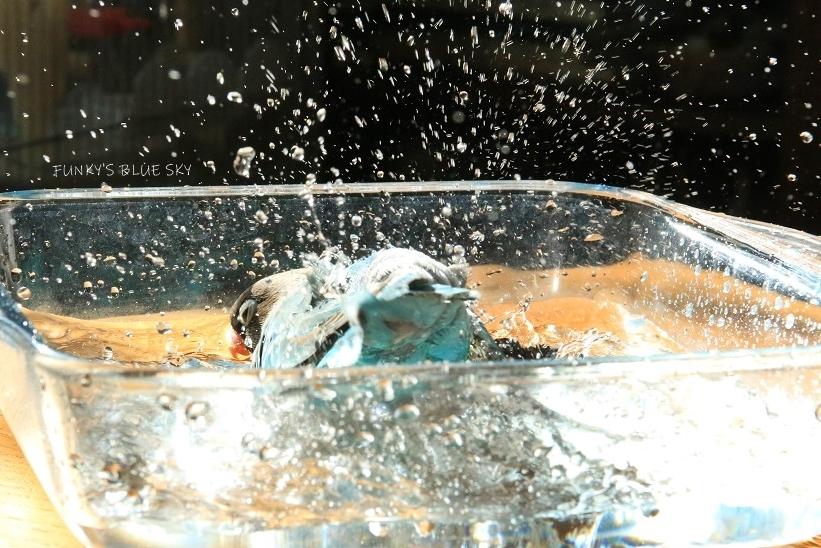 水浴びB.Bの記録(10月9日)_c0145250_16312618.jpg