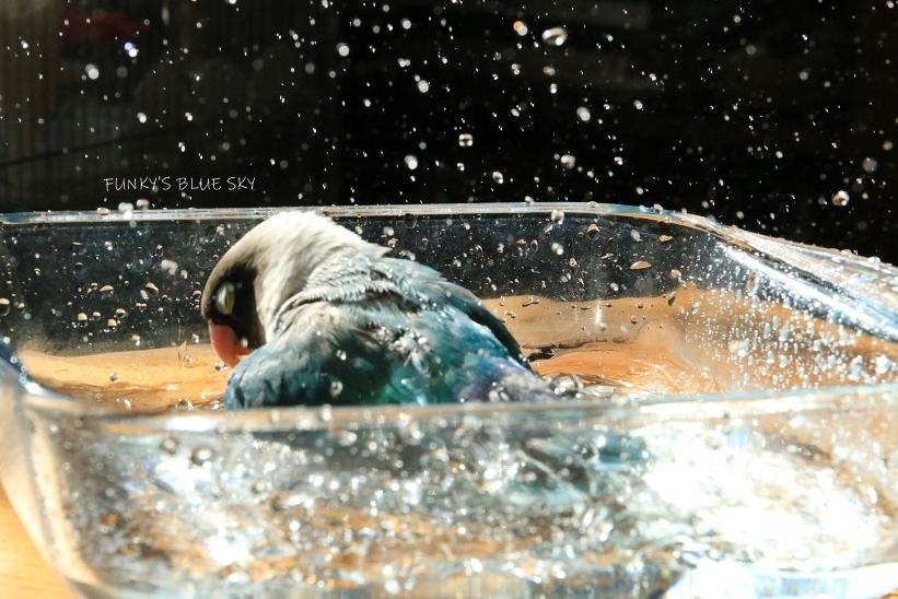 水浴びB.Bの記録(10月9日)_c0145250_16312800.jpg