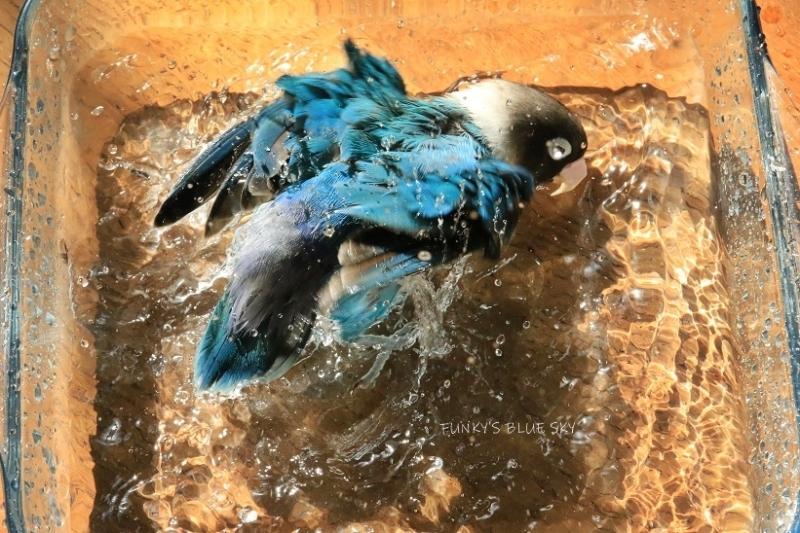 水浴びB.Bの記録(10月9日)_c0145250_16314375.jpg