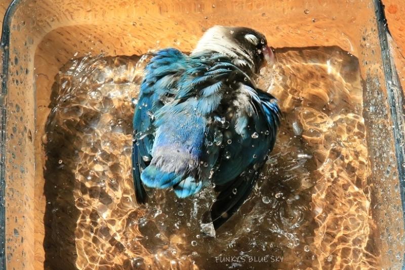 水浴びB.Bの記録(10月9日)_c0145250_16314772.jpg