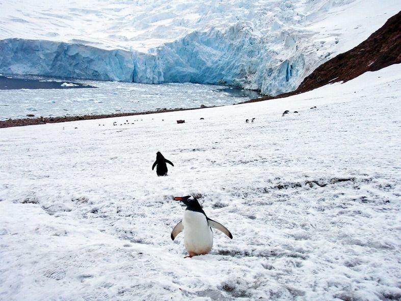 冒険家2人で北極と南極ぶっ刺し!北極登山と南極マラソン応援会_b0151508_12544707.jpg