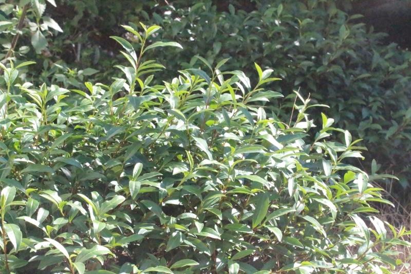 茶LON (69)_b0220318_15554815.jpg