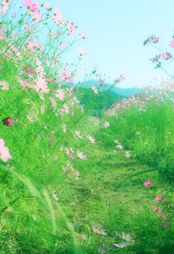 田んぼのあぜ道がロマンティック。名も無き「秋桜小路」_a0329820_14182212.jpg