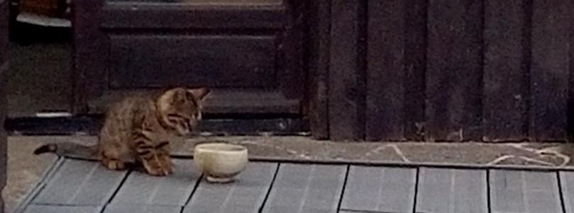 猫を知る Le chat_e0243221_20203813.jpg