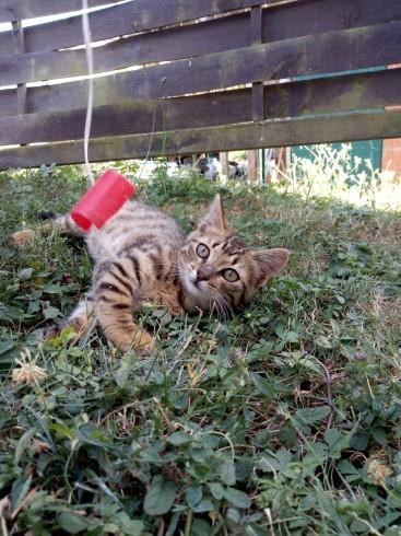 猫を知る Le chat_e0243221_20264185.jpg