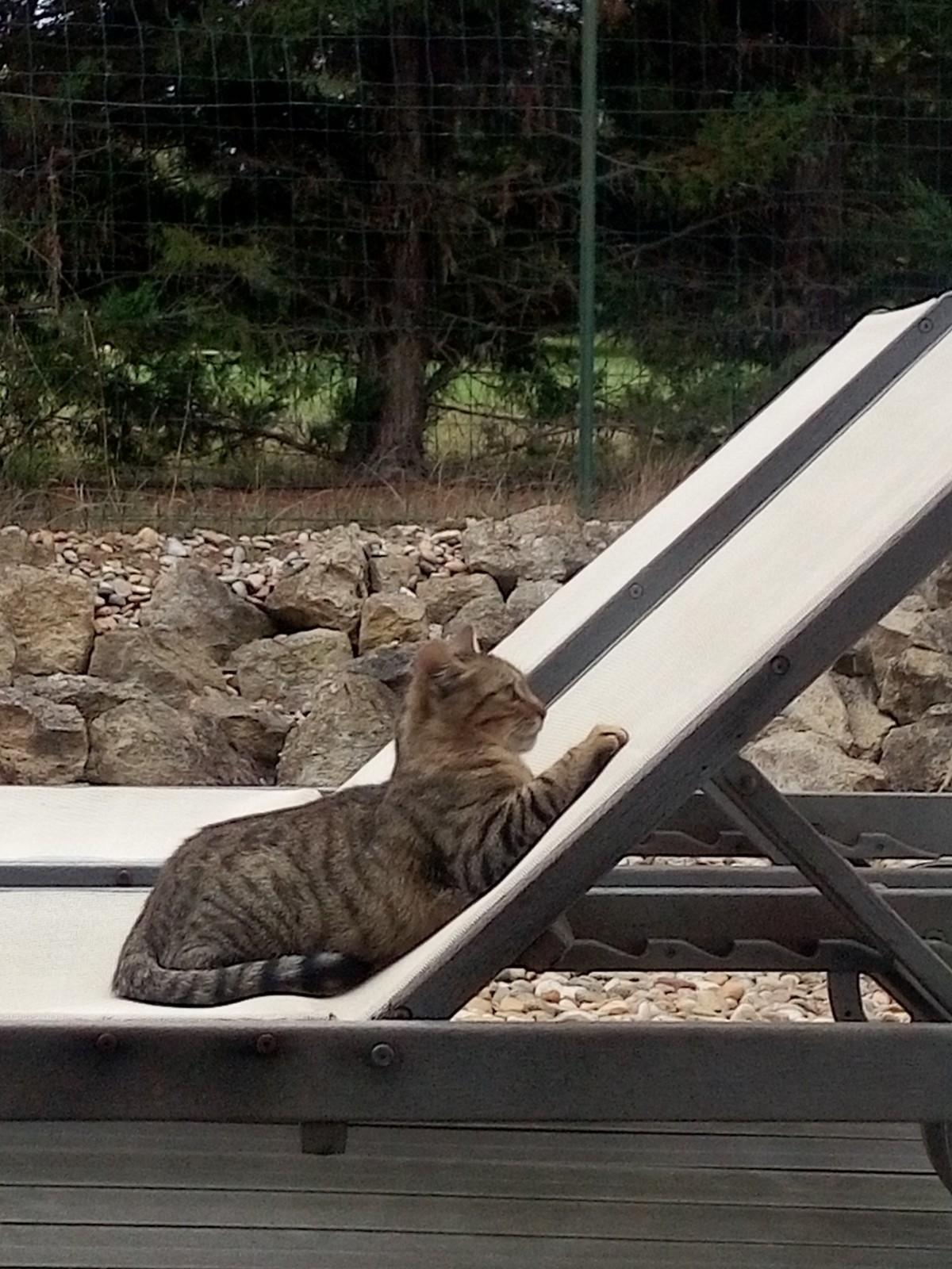 猫を知る Le chat_e0243221_20320136.jpg