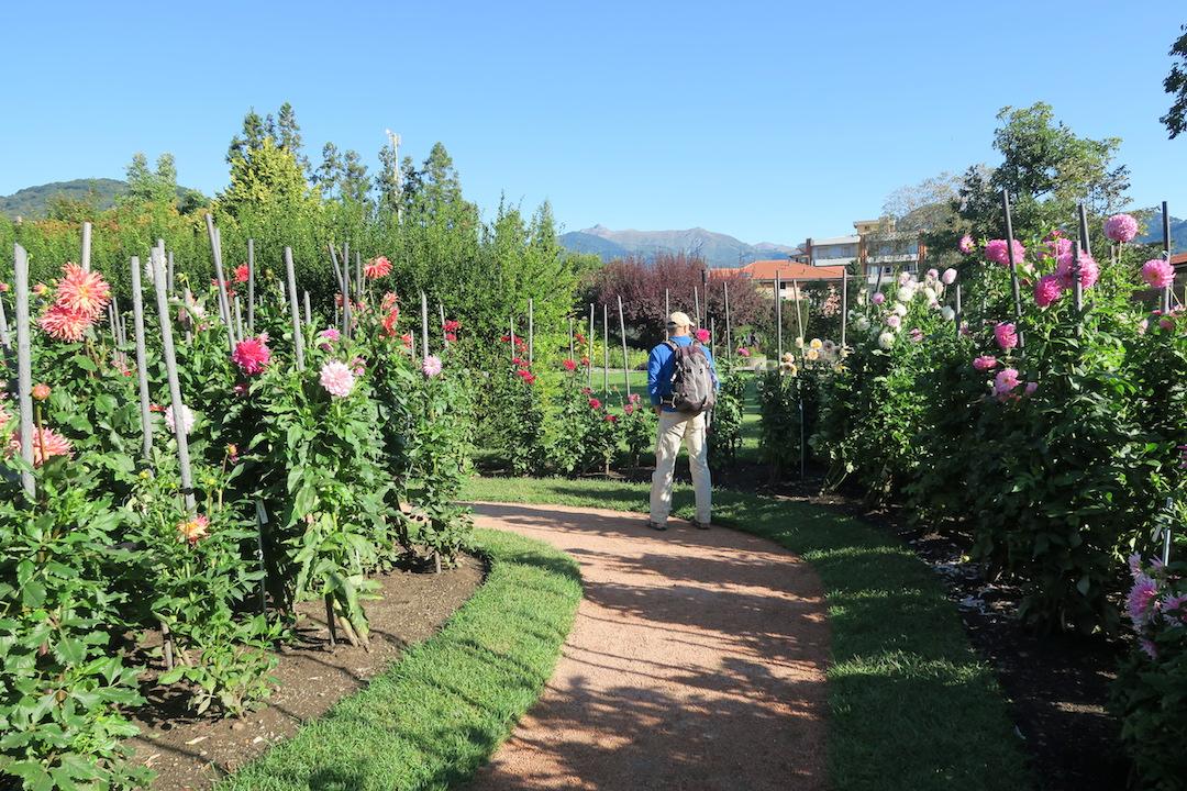 10月8日はスマホ記念日、ダリア花咲くターラント邸庭園_f0234936_16261139.jpg