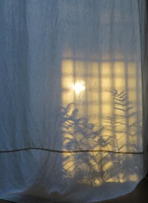 shadow_e0262651_06355344.jpg