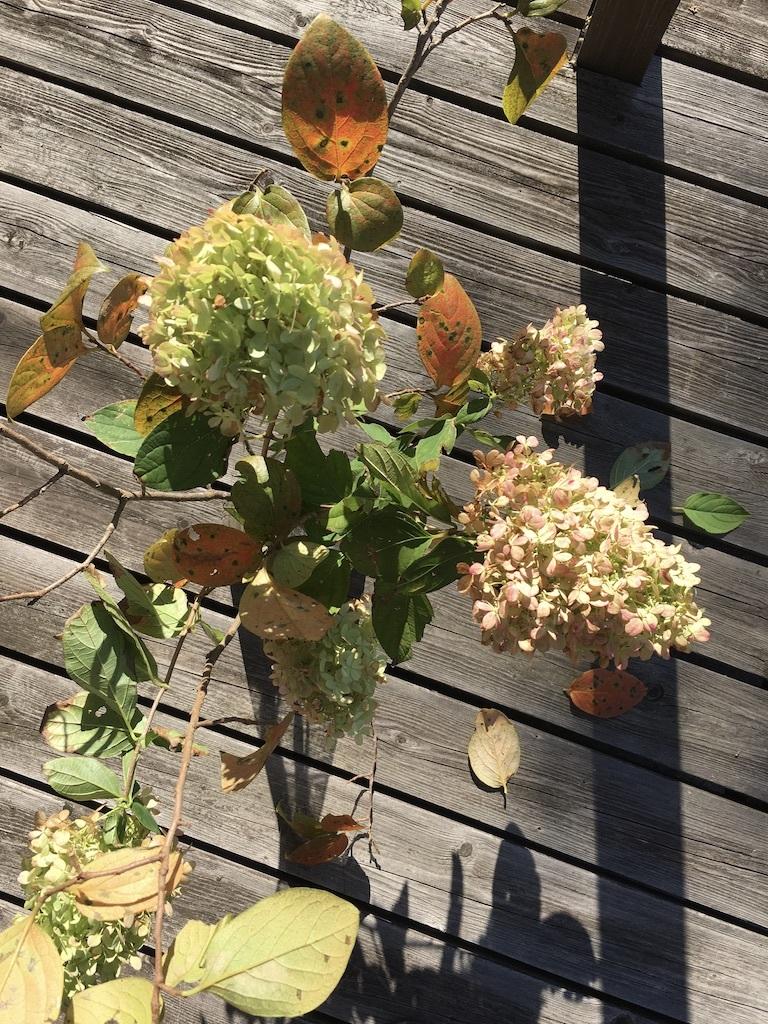 『再入荷した砥部焼「陶房遊」の器たち』&『テーブルは秋のしつらえに』_c0334574_16175779.jpg