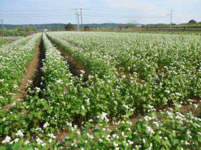 蕎麦畑がキレイになってきました_c0332682_22464746.jpg