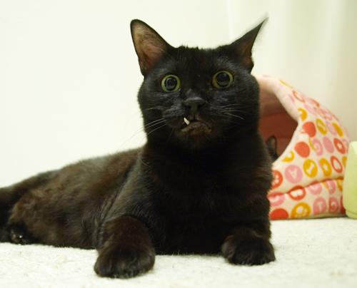 鼻血必須の猫写真_a0389088_17200026.jpg