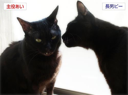 イチャつきすぎる黒猫(カレンダープレゼント企画!)_a0389088_17265231.jpg