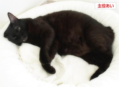 イチャつきすぎる黒猫(カレンダープレゼント企画!)_a0389088_17265308.jpg