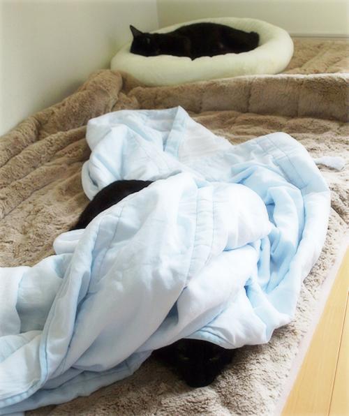 イチャつきすぎる黒猫(カレンダープレゼント企画!)_a0389088_17265336.jpg