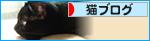 イチャつきすぎる黒猫(カレンダープレゼント企画!)_a0389088_17265399.jpg