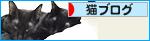 空の色 猫の瞳_a0389088_17273531.jpg