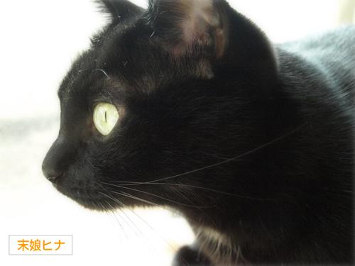 空の色 猫の瞳_a0389088_17273553.jpg