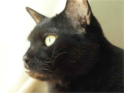 空の色 猫の瞳_a0389088_17273587.jpg