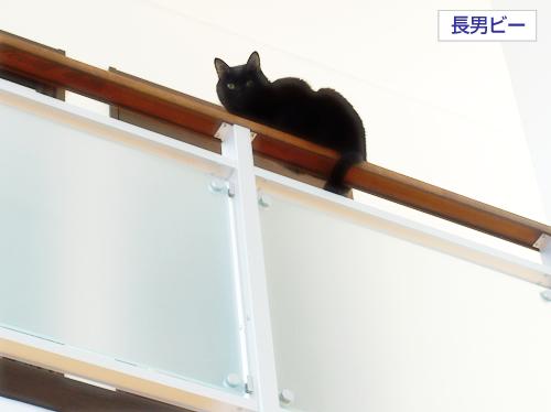 猫同士の絆_a0389088_17275918.jpg