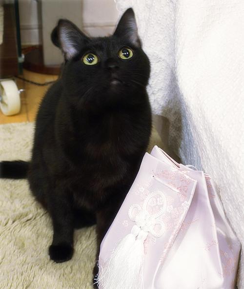 猫同士の絆_a0389088_17280018.jpg