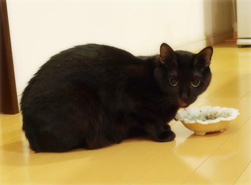 猫同士の絆_a0389088_17280047.jpg