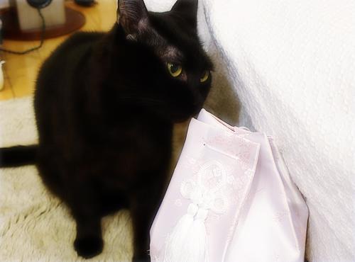 猫同士の絆_a0389088_17280076.jpg