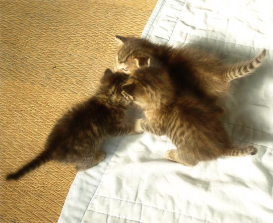 光射す道へ(生後2週間の子猫)_a0389088_17303218.jpg
