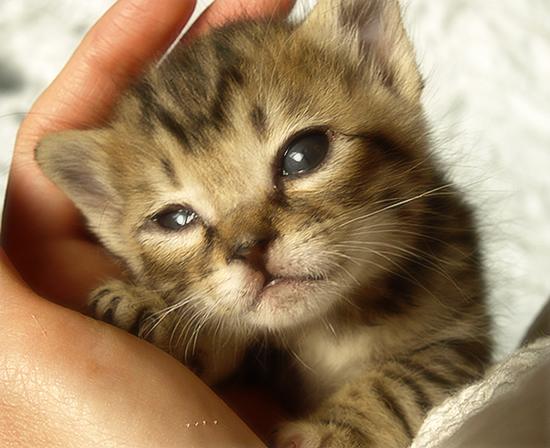 光射す道へ(生後2週間の子猫)_a0389088_17303281.jpg